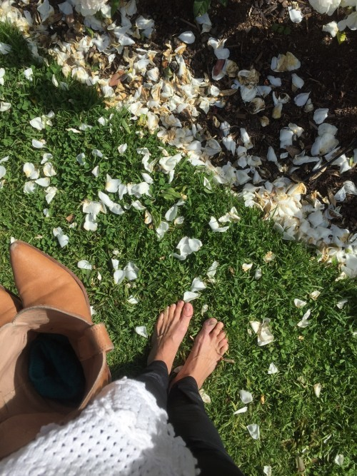 When I branch out on my own I like to walk for miles and miles. These toes were tired and needed to feel the cool ground of a beautiful rose garden on a hill overlooking Auckland, NZ.