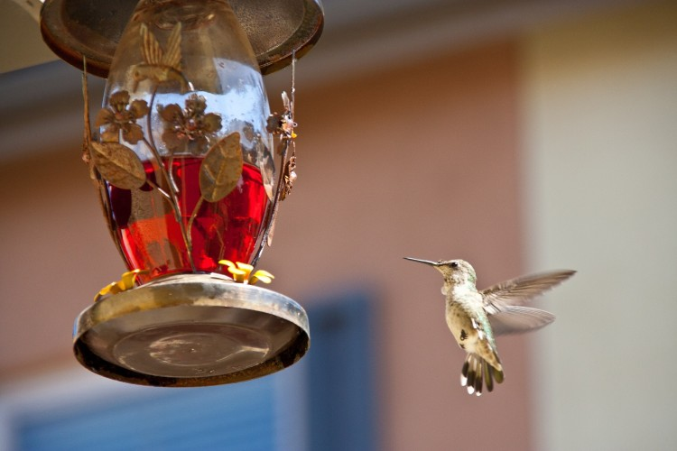 hummingbird-feeding-742919_1920