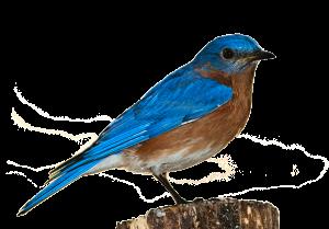 bird-1232416_1920